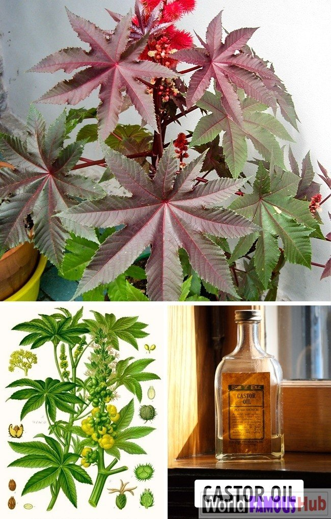 Top 12 Deadly Plants That Must Not Be Touched