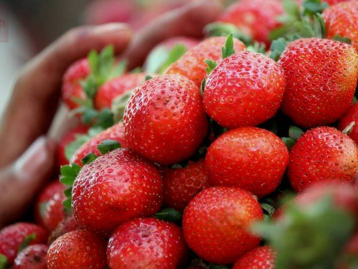 Strawberry Ke Fayde | Strawberry Benefits in Urdu/Hindi